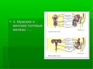 4. Мужские и женские половые железы - …