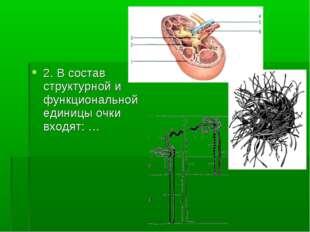 2. В состав структурной и функциональной единицы очки входят: …
