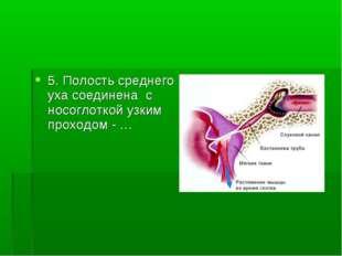 5. Полость среднего уха соединена с носоглоткой узким проходом - …
