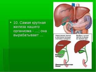 10. Самая крупная железа нашего организма - …; она вырабатывает …