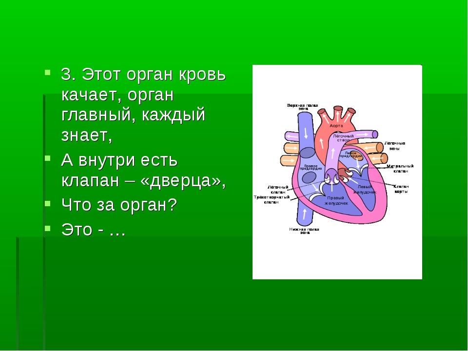 3. Этот орган кровь качает, орган главный, каждый знает, А внутри есть клапан...