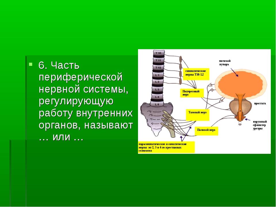 6. Часть периферической нервной системы, регулирующую работу внутренних орган...
