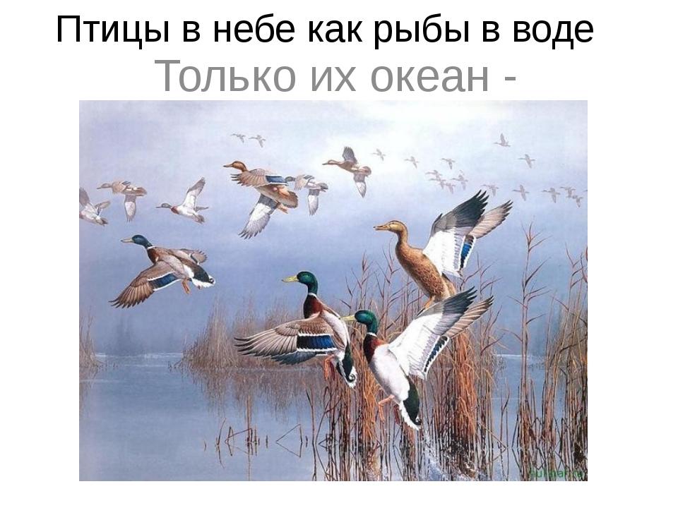 Птицы в небе как рыбы в воде Только их океан - воздушный