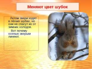 Летом звери ходят в лёгких шубах, но они не спасут их от зимних холодов. Вот