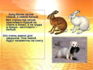 Заяц-беляк летом серый, а зимой белый. Мех горностая летом красновато-бурый