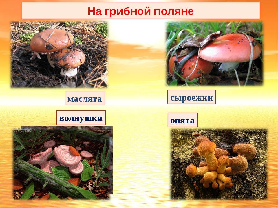 маслята волнушки сыроежки опята На грибной поляне