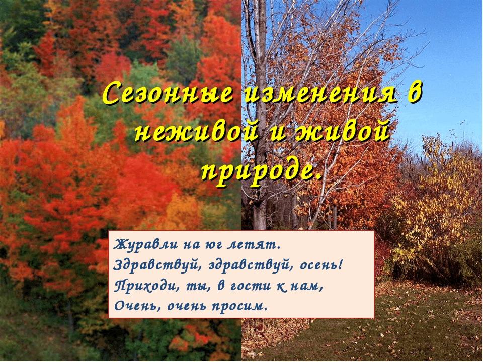 Журавли на юг летят. Здравствуй, здравствуй, осень! Приходи, ты, в гости к на...