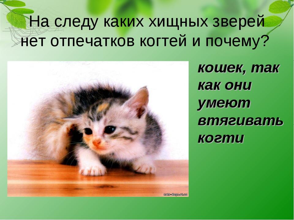 На следу каких хищных зверей нет отпечатков когтей и почему? кошек, так как...