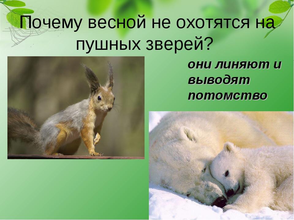 Почему весной не охотятся на пушных зверей? они линяют и выводят потомство