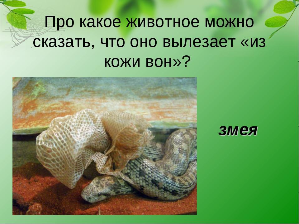 Про какое животное можно сказать, что оно вылезает «из кожи вон»? змея