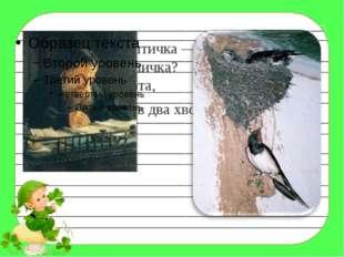 Угадайте, что за птичка — Тёмненькая невеличка? Беленькая с живота, Хвост