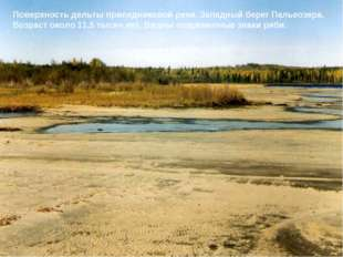 Поверхность дельты приледниковой реки. Западный берег Пальеозера. Возраст око