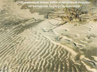 Современные знаки ряби и ветровые надувы на западном берегу Пальеозера