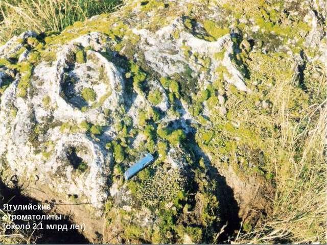 Ятулийские строматолиты (около 2,1 млрд лет)