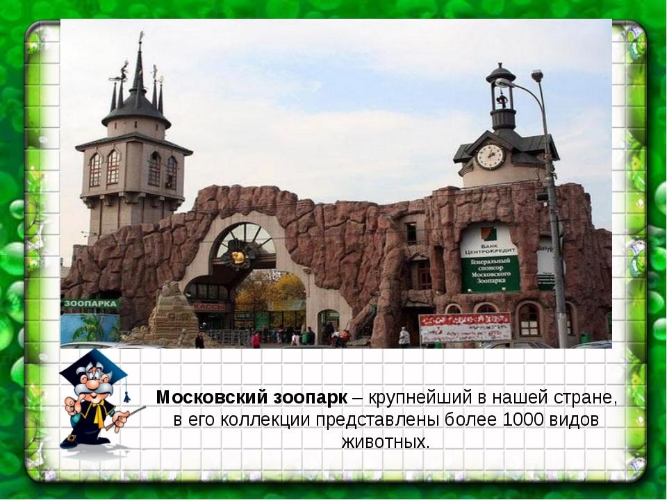 Московский зоопарк – крупнейший в нашей стране, в его коллекции представлены...