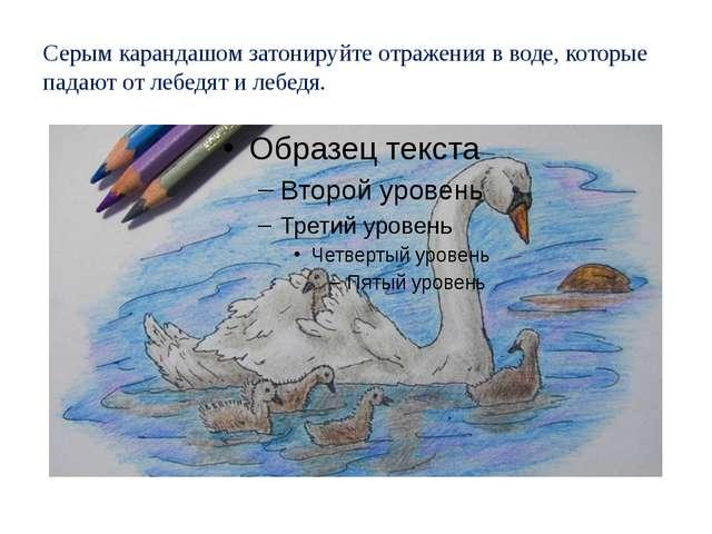 Серым карандашом затонируйте отражения в воде, которые падают от лебедят и ле...