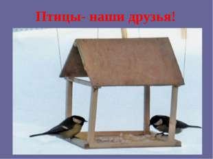 Птицы- наши друзья!