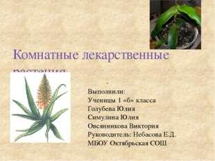 Комнатные лекарственные растения Выполнили: Ученицы 1 «б» класса Голубева Юли