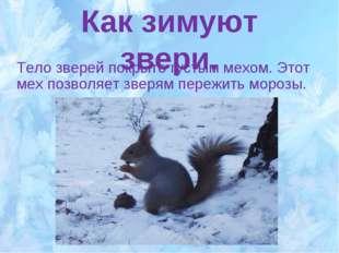 Как зимуют звери. Тело зверей покрыто густым мехом. Этот мех позволяет зверям