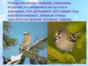 Птицы питаются почками, семенами, ягодами, оставшимися на кустах и деревьях.