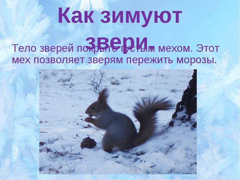 Как зимуют звери. Тело зверей покрыто густым мехом. Этот мех позволяет зверям...