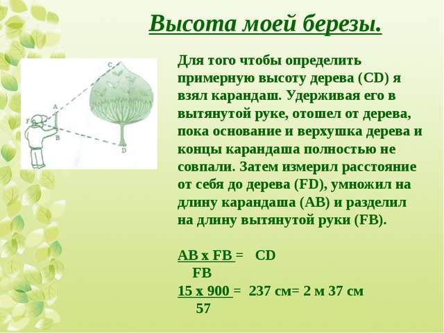 Для того чтобы определить примерную высоту дерева (CD) я взял карандаш. Удерж...