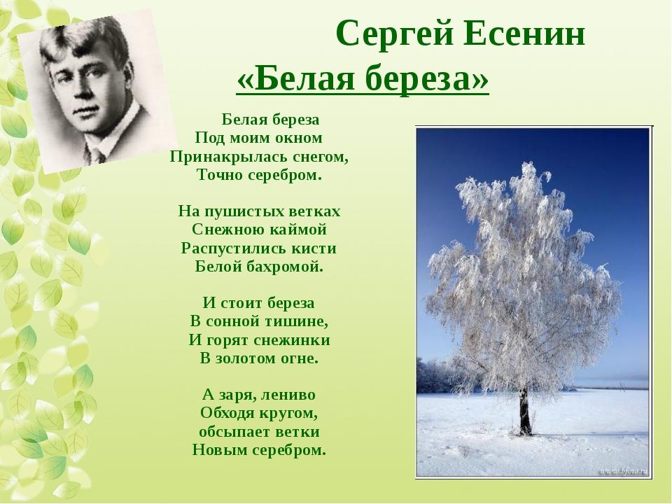 Сергей Есенин «Белая береза» Белая береза Под моим окном Принакрылась снегом...