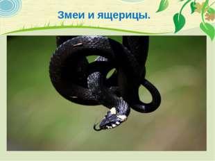 Змеи и ящерицы.