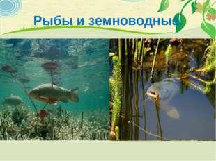 Рыбы и земноводные.