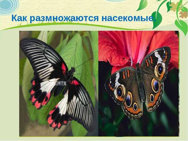 Как размножаются насекомые.