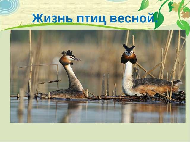 Жизнь птиц весной.