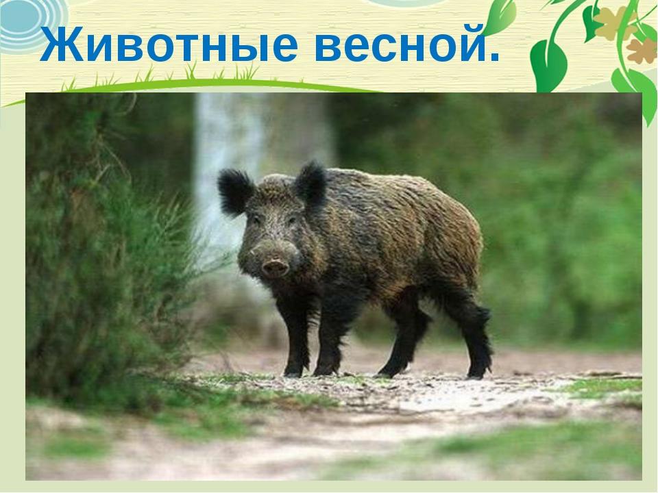 Животные весной.