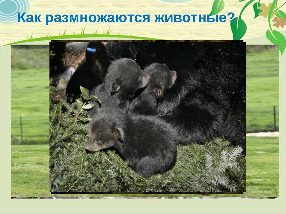 Как размножаются животные?