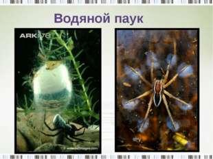 Водяной паук