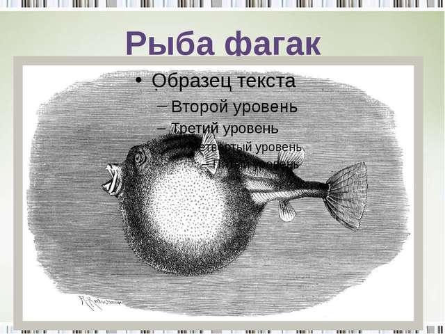 Рыба фагак