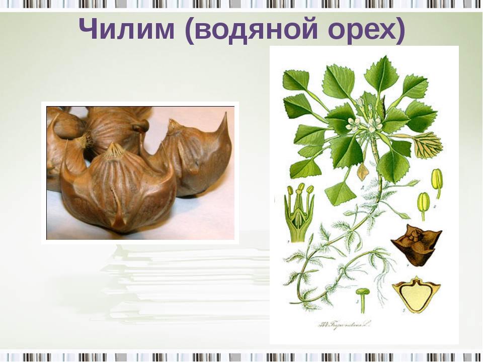 Чилим (водяной орех)