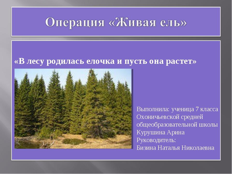 «В лесу родилась елочка и пусть она растет» Выполнила: ученица 7 класса Охон...