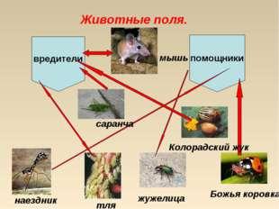Животные поля. вредители помощники наездник саранча Божья коровка Колорадский
