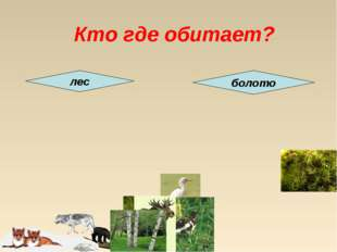 Кто где обитает? лес болото