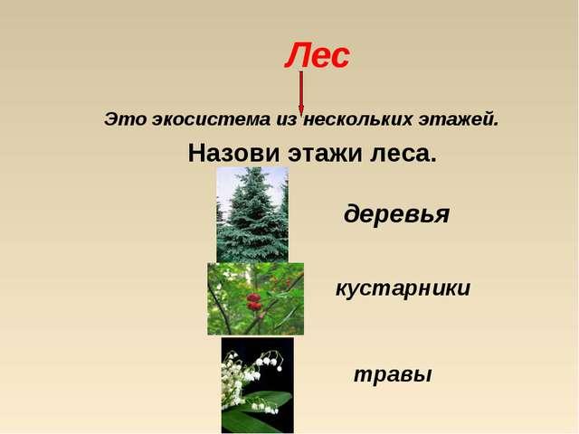 Лес Это экосистема из нескольких этажей. Назови этажи леса. деревья кустарник...