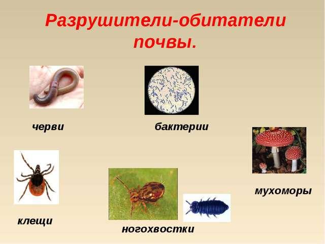 Разрушители-обитатели почвы. черви бактерии клещи ногохвостки мухоморы
