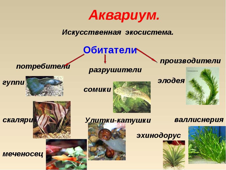 Аквариум. Искусственная экосистема. Обитатели потребители разрушители произво...