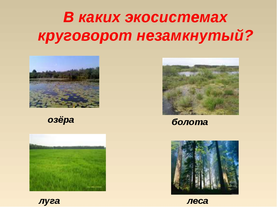 В каких экосистемах круговорот незамкнутый? озёра луга болота леса