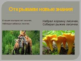 Открываем новые знания В нашем зоопарке нет лисичек. Наблюдал забавных лисиче