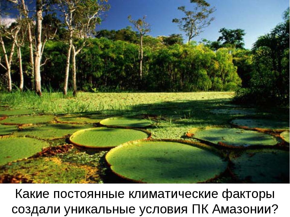 Какие постоянные климатические факторы создали уникальные условия ПК Амазонии?