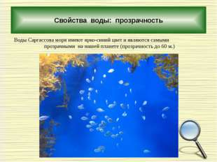 Свойства воды: прозрачность Воды Саргассова моря имеют ярко-синий цвет и явл