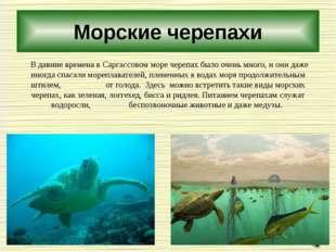 Морские черепахи В давние времена в Саргассовом море черепах было очень много