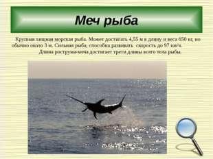 Меч рыба Крупная хищная морская рыба. Может достигать 4,55м в длину и веса 6
