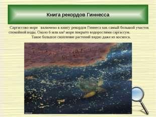Книга рекордов Гиннесса Саргассово море включено в книгу рекордов Гиннеса ка