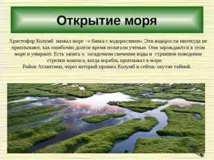 Открытие моря Христофор Колумб назвал море –« банка с водорослями». Эти водор